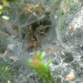 How To Get Rid of Grass Spiders Naturally 2020 - Image By abchomeandcommercial