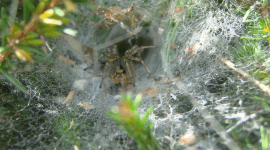 How To Get Rid of Grass Spiders Naturally