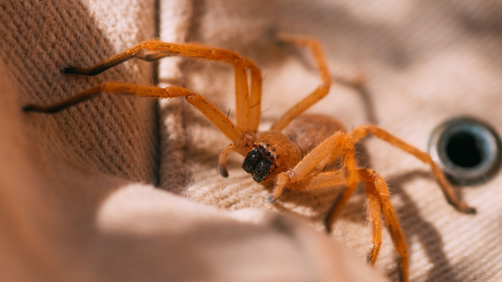 How To Get Rid of Hobo Spiders 2020 - Image By thespruce