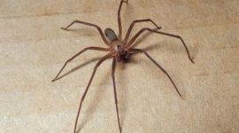 How To Get Rid of Spiders In Garden