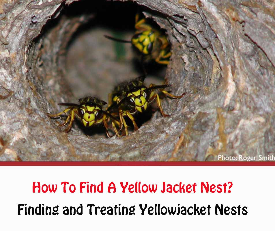 How to Find A Yellow Jacket Nests