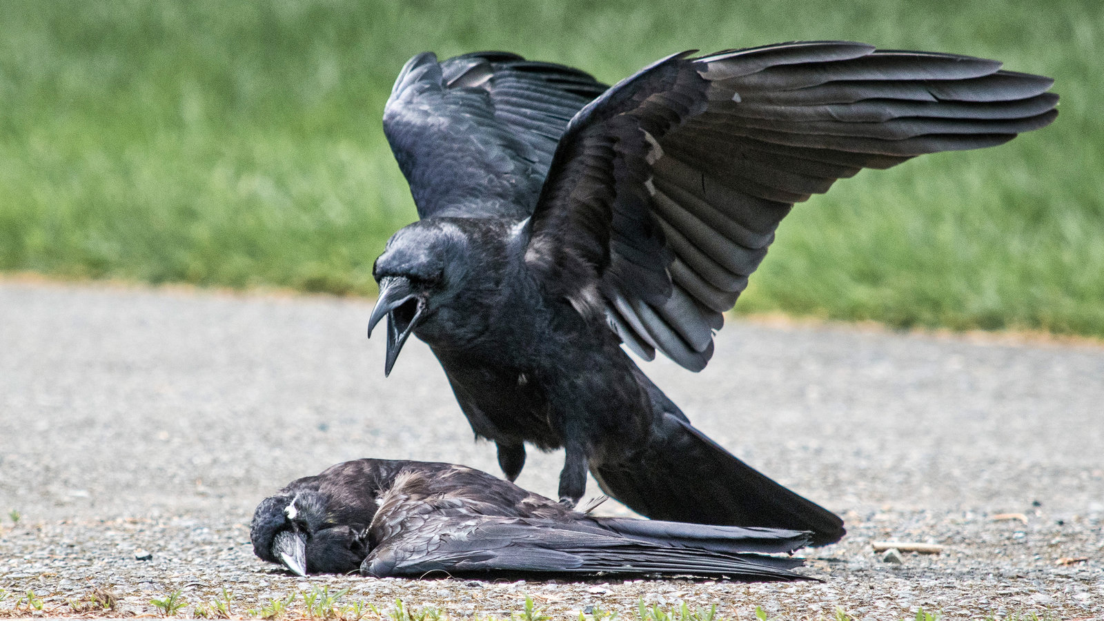 How to Keep Crows Away From Bird Feeders 2021 - Image By nytimes