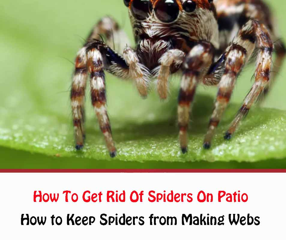 How to Keep Spiders from Making Webs