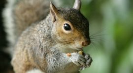 How to Keep Squirrels From Digging in Your Yard?