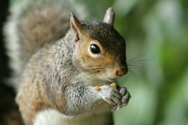 How to keep squirrels away 2021 - Image By livescience