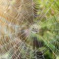Spiders In Garage 2020 - Image By callnorthwest