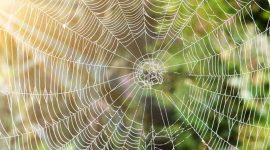 How To Get Rid Of Spiders In Garage Naturally