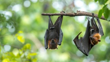 Do Electronic Rodent Repellents Work on Bats?