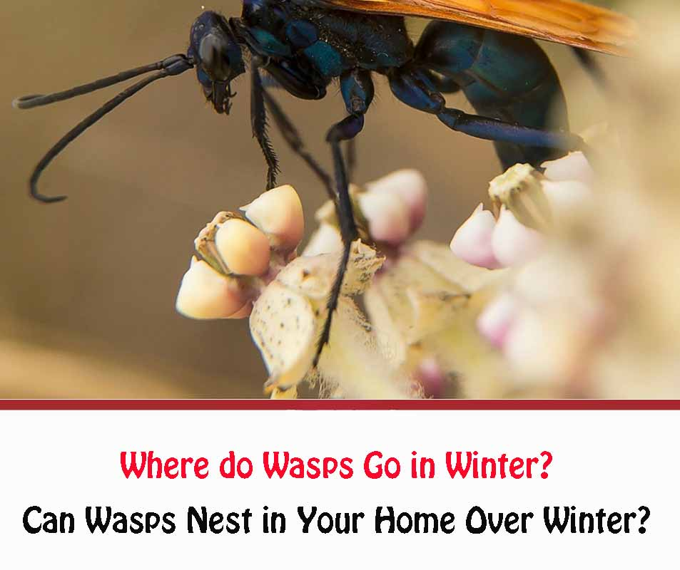 Where do Wasps Go in Winter?