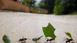 Do Essential Oils keep Ants Away?
