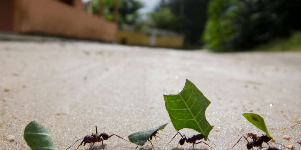 ants in group - Image By Time