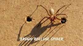 Can Spiders Bite Through Leggings?