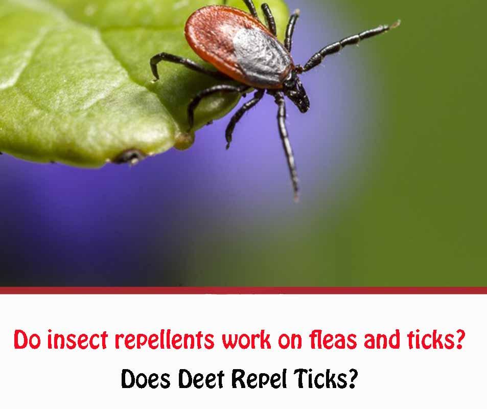 does deet repel ticks