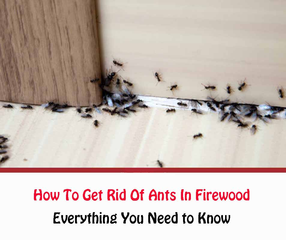 Ants in Firewood