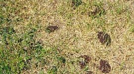 How to Get Rid of Ants in Lawn Naturally