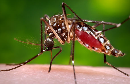 Can Mosquitoes Transmit Diseases