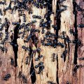 Carpenter Ants in trees 2021 - Image By floridastreemasters