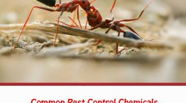 What Chemicals do Exterminators Use for Ants?
