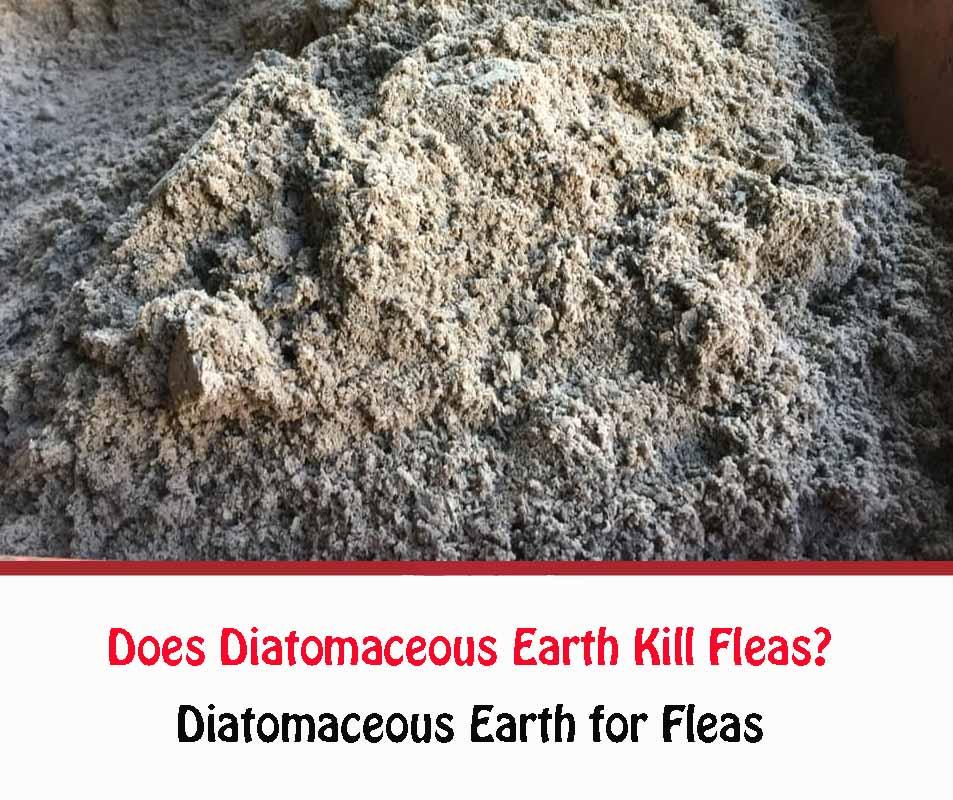 Diatomaceous Earth for Fleas 2021