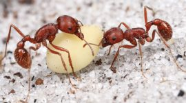 How To Get Rid Of Harvester Ants Naturally