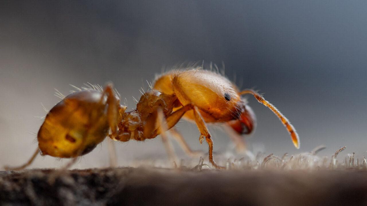 Do Ants Sleep - Image By nedhardy