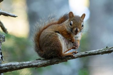 Do Wind Chimes Scare Away Squirrels?