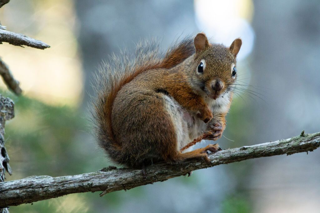 Do Wind Chimes Scare Away Squirrels 2021 - Image By Aislinn Sarnacki