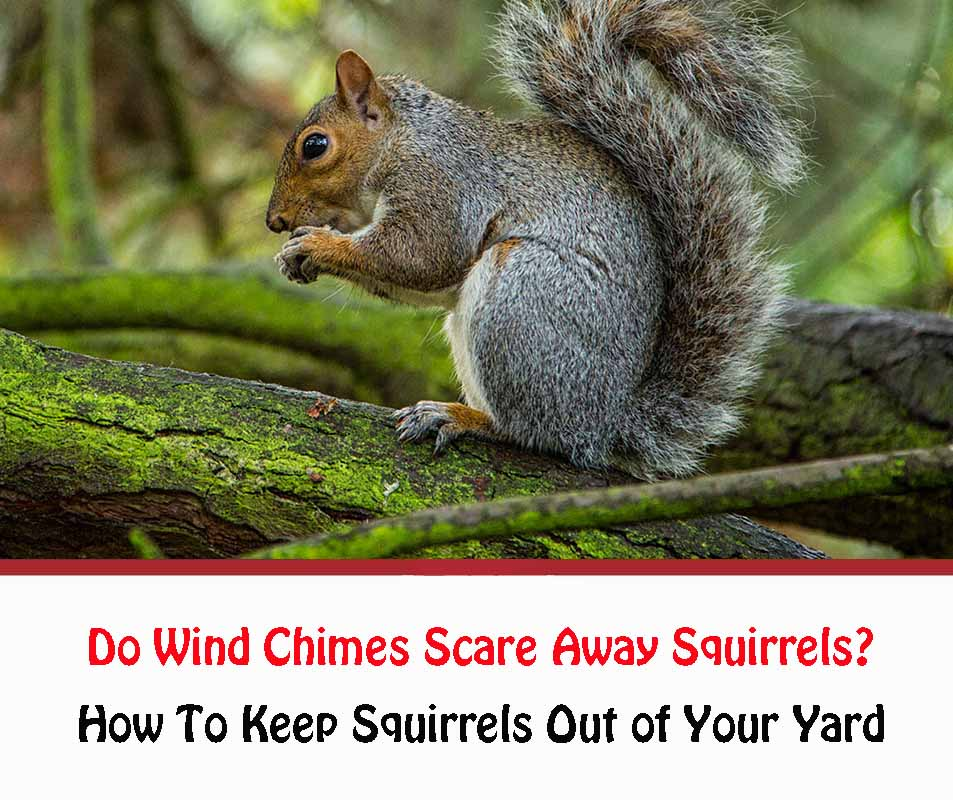 Do Wind Chimes Scare Away Squirrels