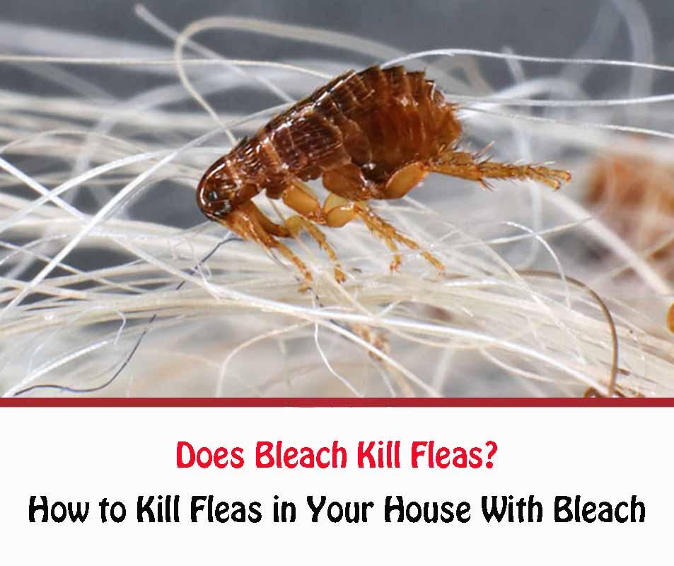 Does Bleach Kill Fleas