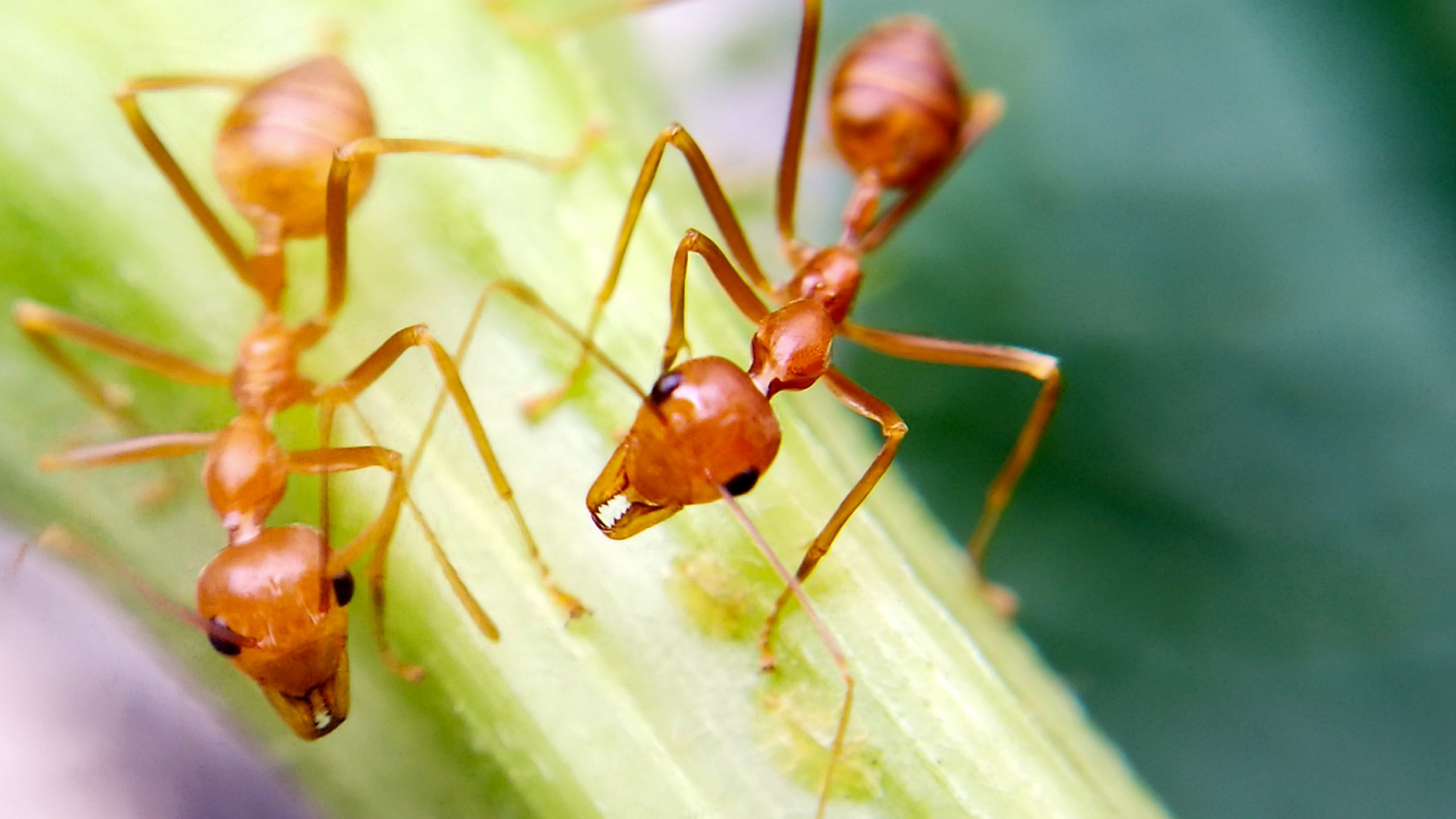 Does Salt Kill Ants - Image By nytimes