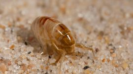 Does Salt Kill Fleas?