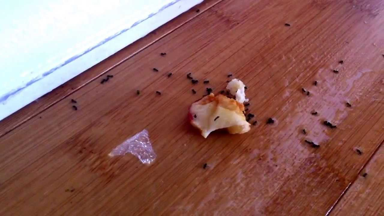 Does vinegar kill ants