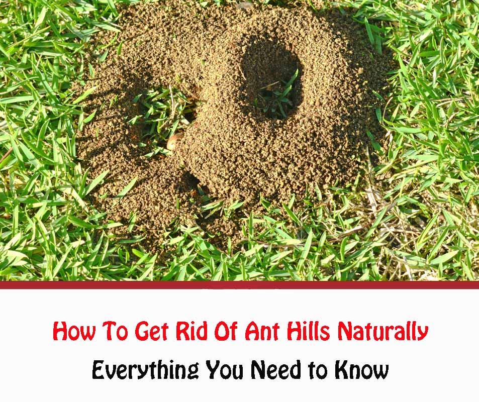 How To Get Rid Of Ant Hills Naturally