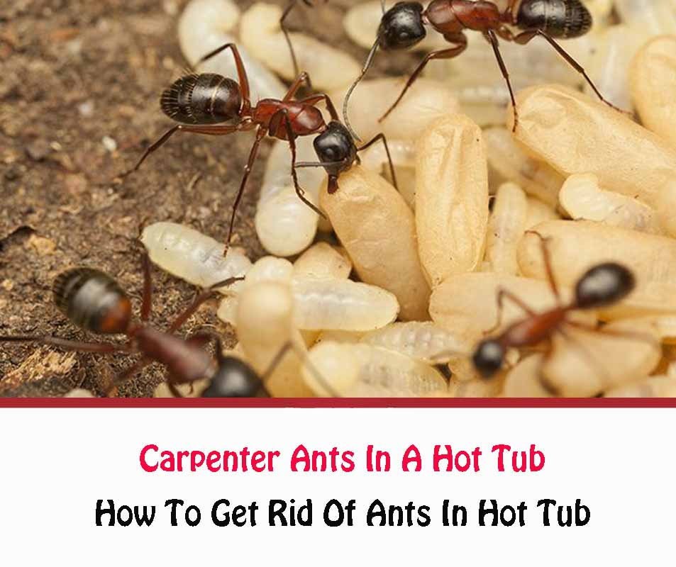 How To Get Rid Of Ants In Hot Tub