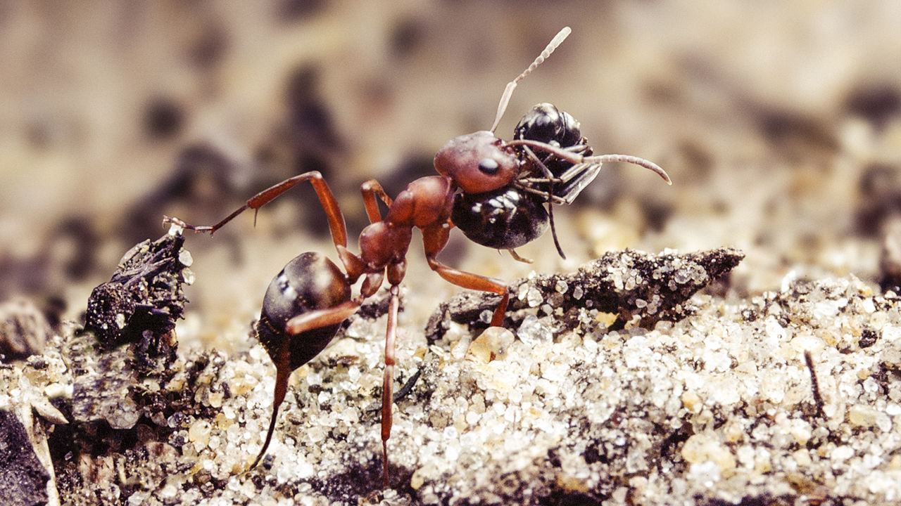 How To Get Rid Of Ants With Salt - Image By Kim Taylor