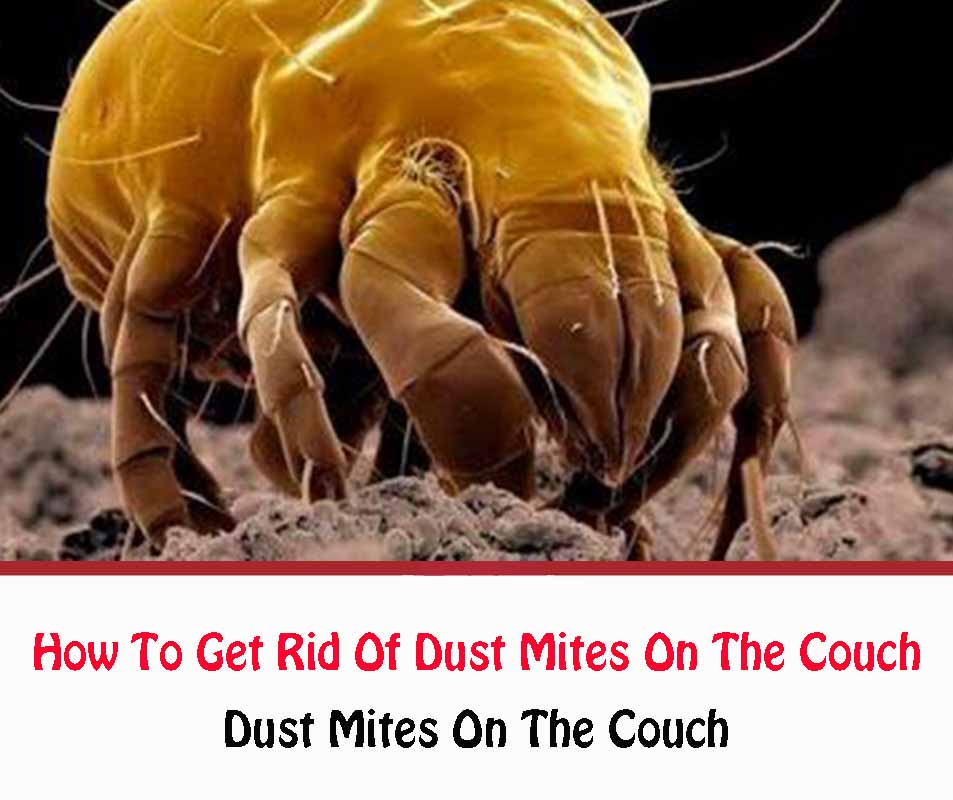 How To Get Rid Of Dust Mites On The Couch