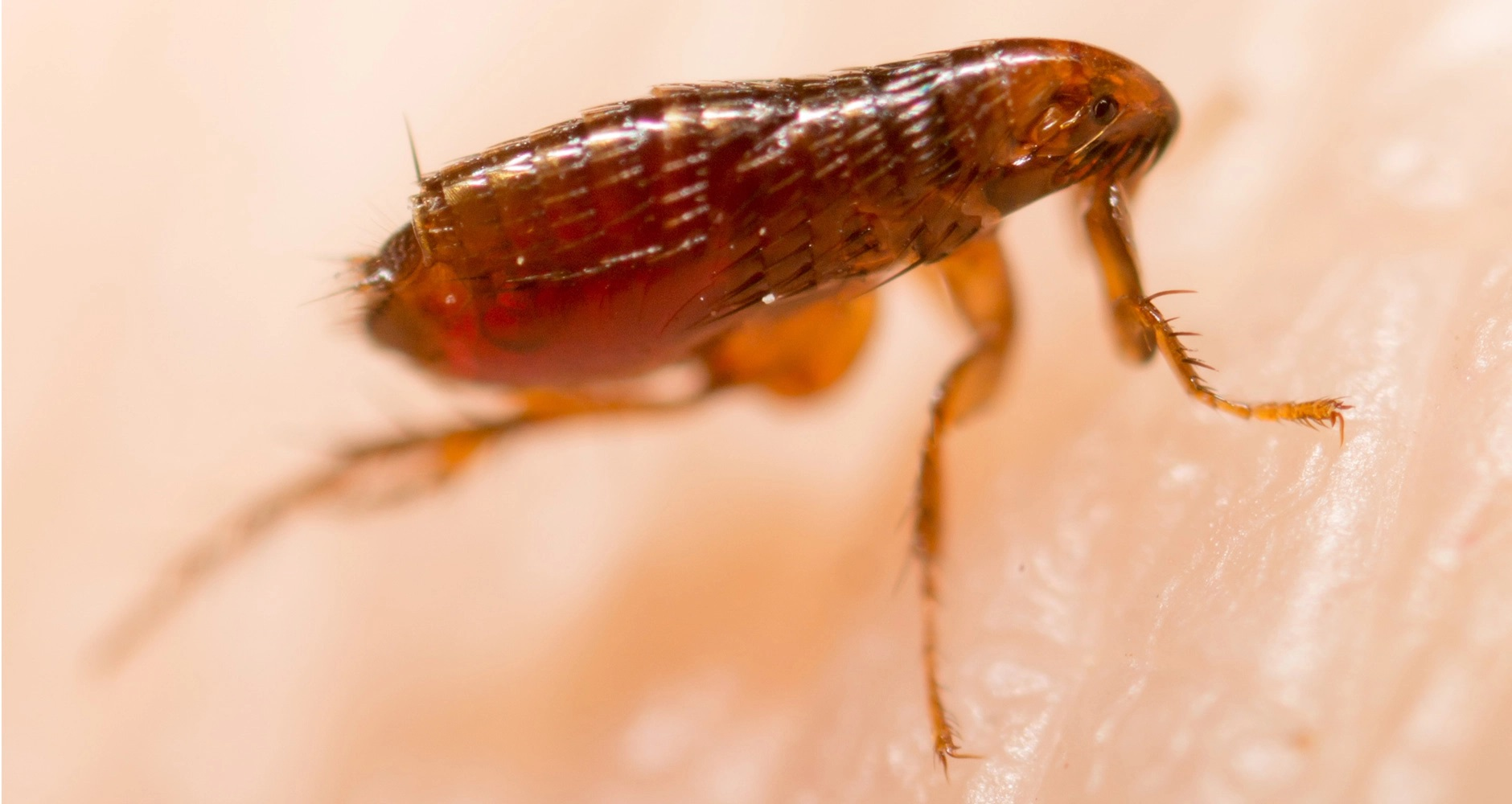 How To Get Rid Of Fleas With Salt - Image By farmersalmanac