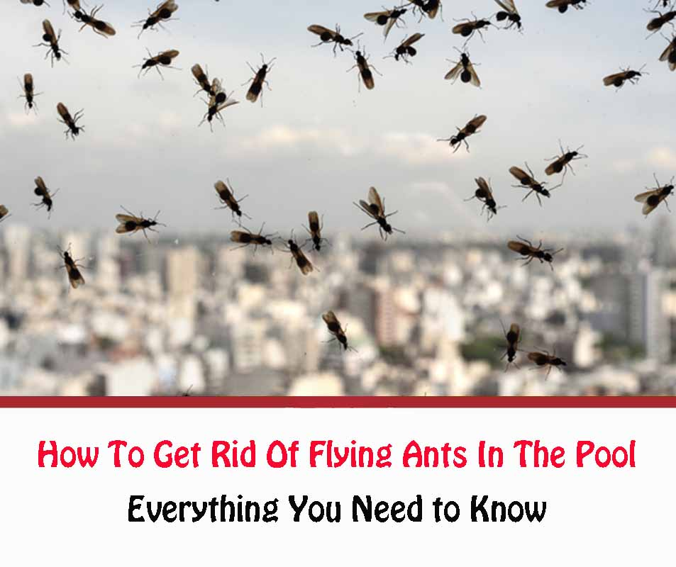 How To Get Rid Of Flying Ants In The Pool