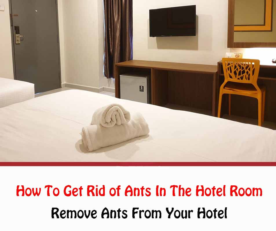 How To Get Rid of Ants In The Hotel Room