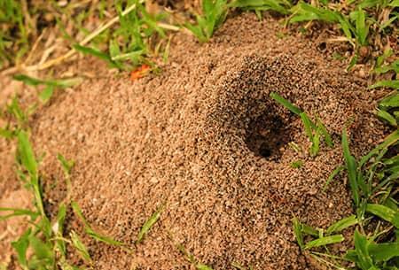 How do ant hills work - Image By montgomeryexterminating