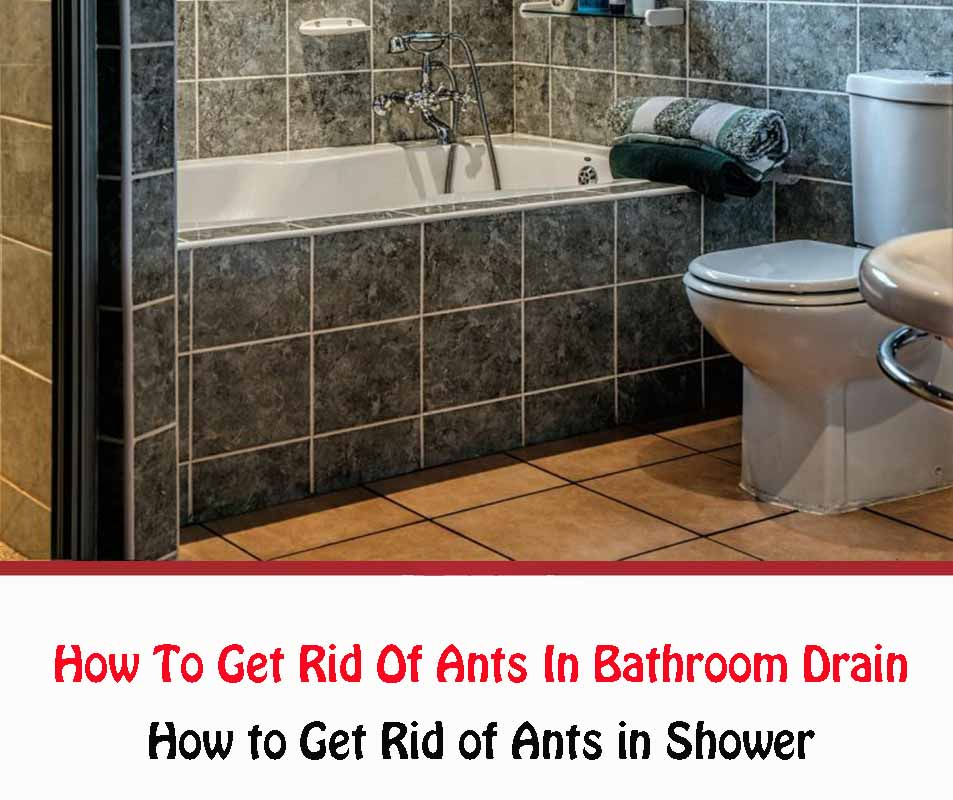 How to Get Rid of Ants in the Shower