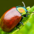 June Bugs info