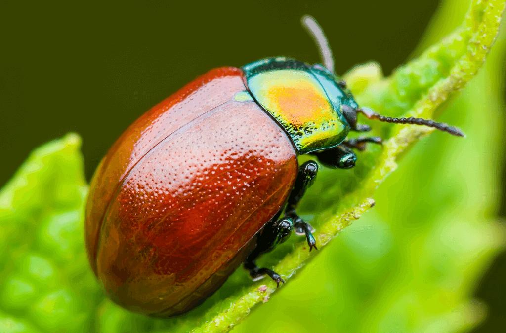 https://www.getridofallthings.com/wp-content/uploads/2021/01/June-Bugs-info.png