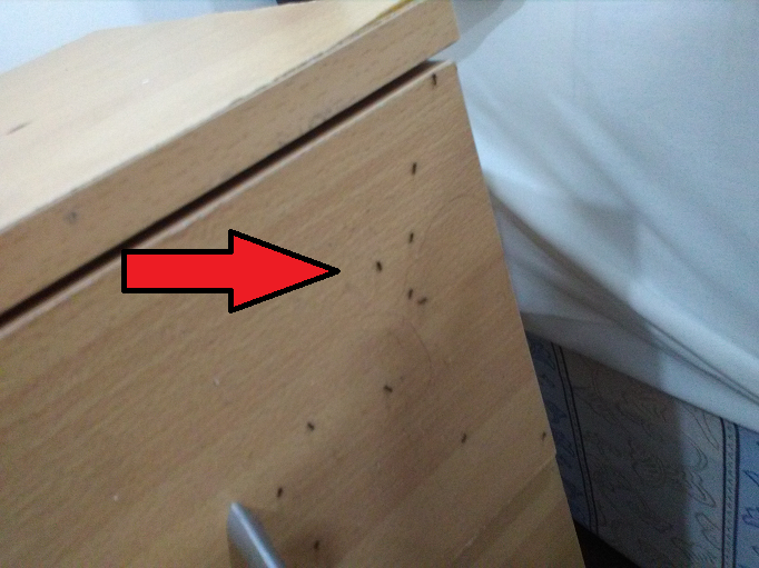 Most Common Ants In the Hotels - Image By aspokesmansaid