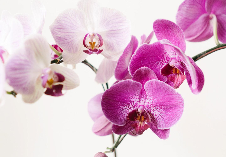 https://www.getridofallthings.com/wp-content/uploads/2021/01/Orchids.jpg