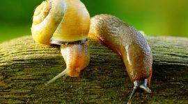 Plants That Repel Slugs And Snails