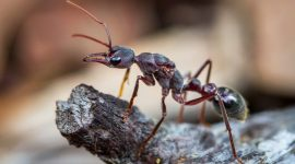 How To Get Rid Of Ants In Your Grill Naturally