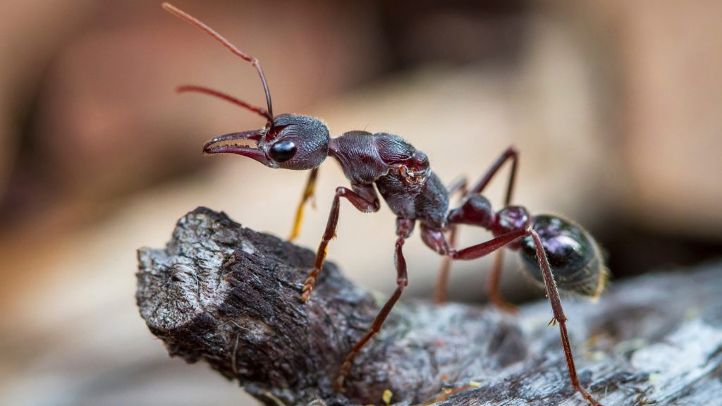 What Kinds Of Ants Attack Grills