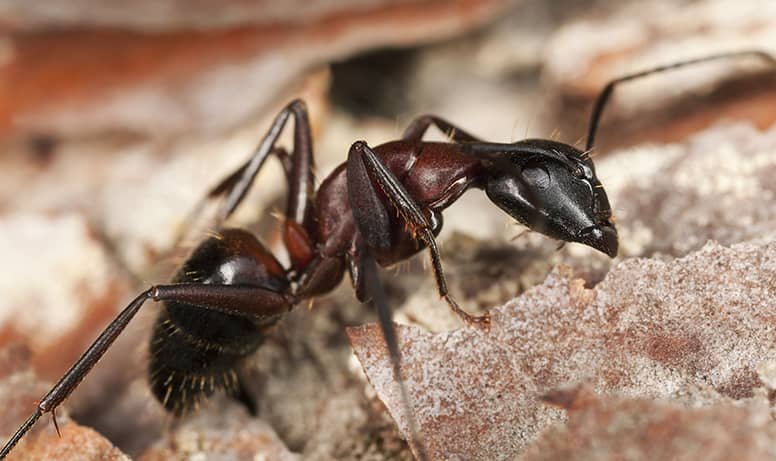 What Time Of Day Are Ants Most Active - Image By arrownj