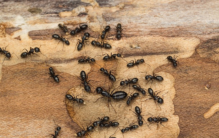 What To Do If The Ants Invaded Your Home From The Firewood